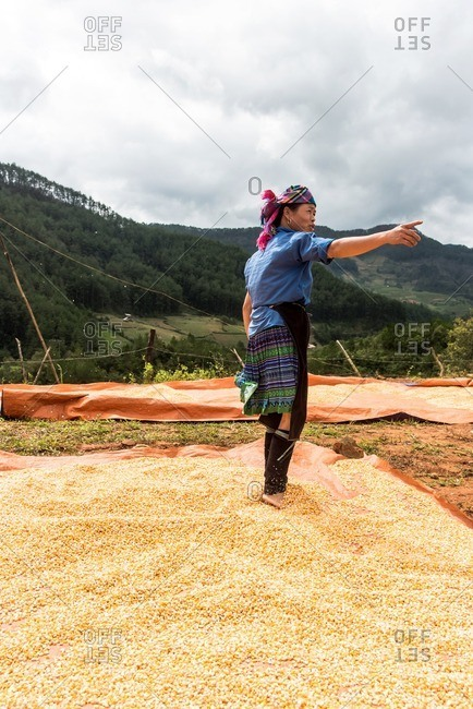 Mu Cang Chai, Vietnam - January 13, 2017: Woman pointing with finger while working with grain.