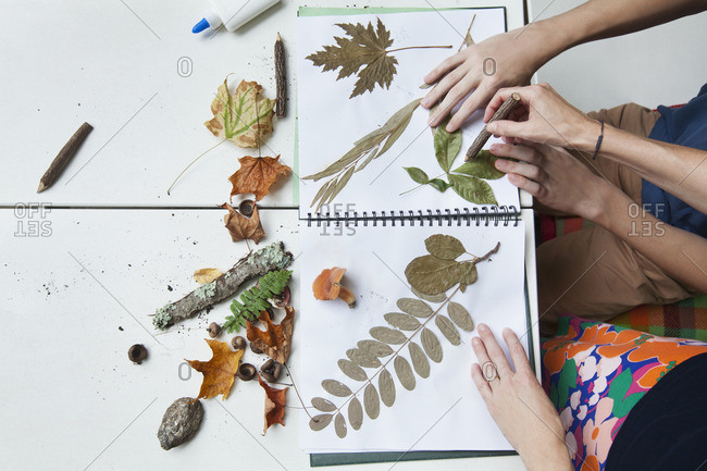 Hands of Caucasian mother and son with nature scrapbook outdoors