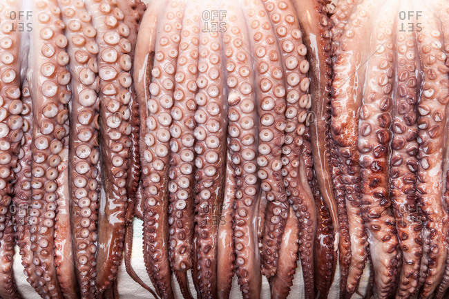 Row of hanging squid tentacles, close-up, Korea