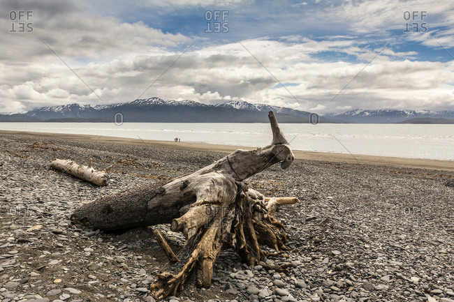 Driftwood on shingle beach, Homer Spit, Kachemak Bay, Alaska, USA