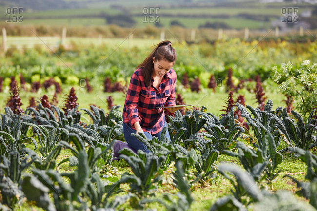 Woman in vegetable garden using digital tablet