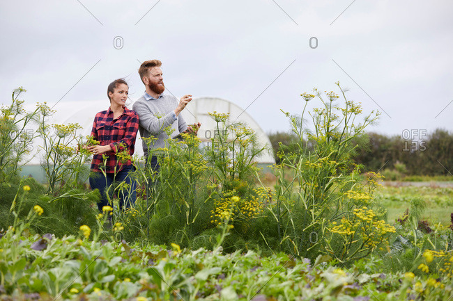 Couple on farmland using digital tablet