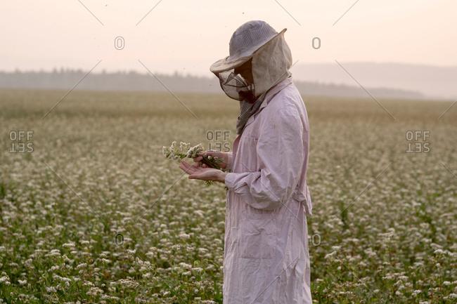 Female beekeeper inspecting plant in flower field, Ural, Russia