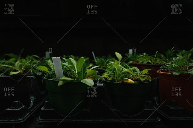 Plants in starter pots