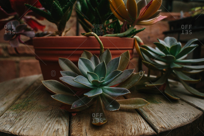 Succulent plants on outdoor table