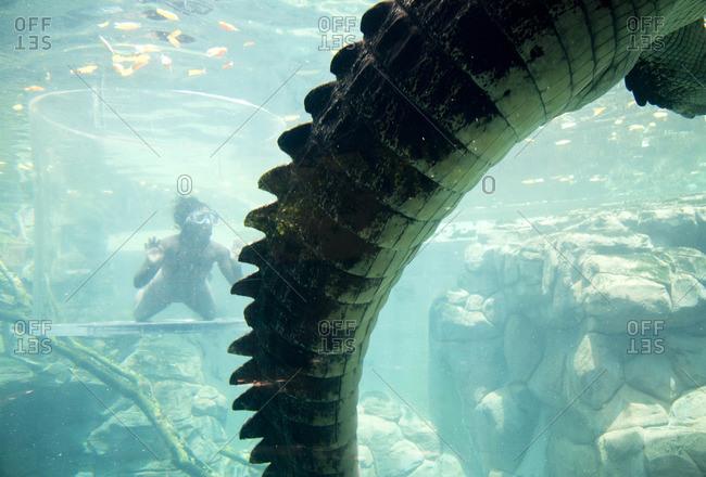 Tourist swimming by a crocodile, Darwin, Australia