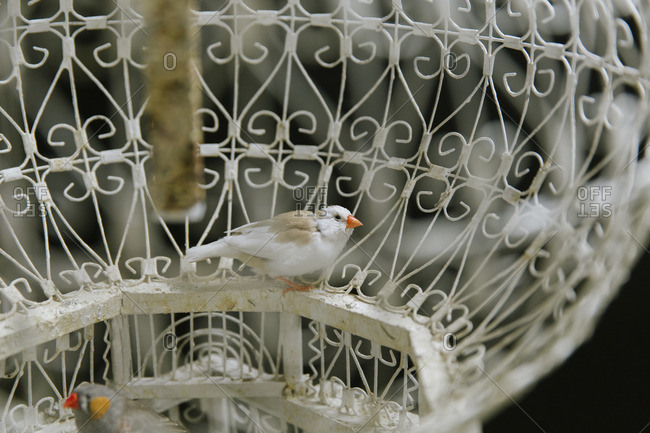 Birds in a metal cage