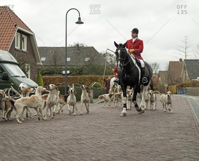 Geesteren, Achterhoek, Gelderland, The Netherlands - November 19, 2016: Man riding horse with herd of dogs in village at start of drag hunting.