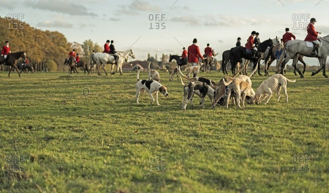 Geesteren, Achterhoek, Gelderland, The Netherlands - November 19, 2016: Horse riders and hounds in field at fisnish of drag hunt.
