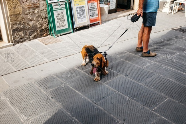 Gubbio, Italy - August 15, 2015: A dog in the streets