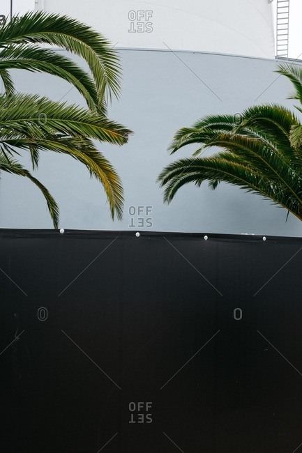 Palm trees in front of wall in Lisbon, Portugal