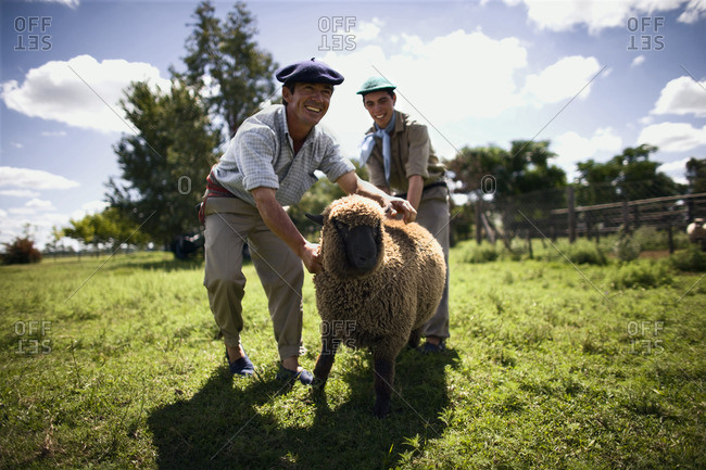 Farmers handling a sheep.