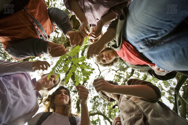 Group of people learning about plants in the forest.