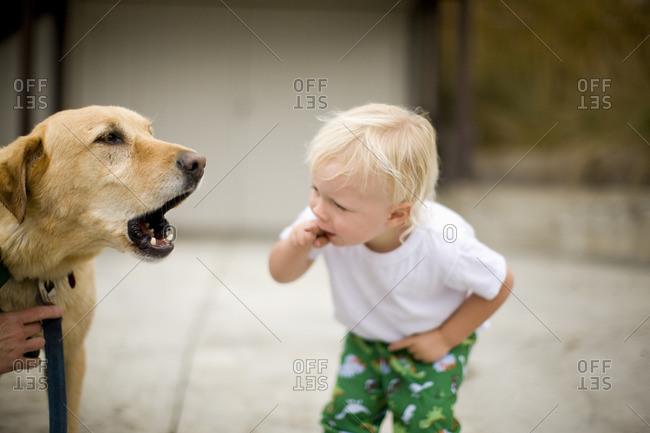 Toddler boy looking at his barking dog.