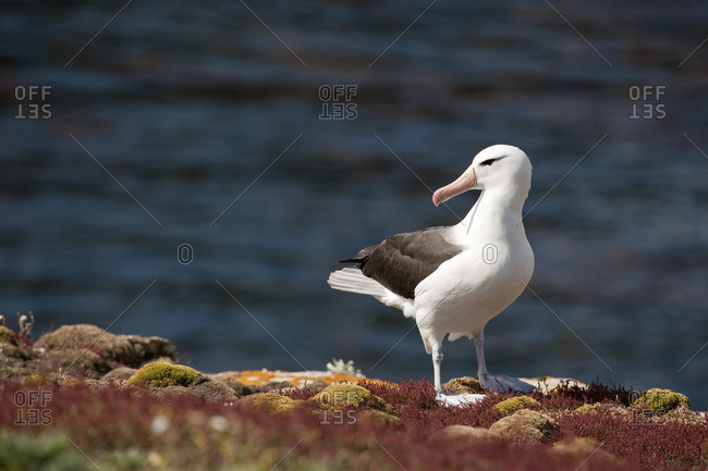 Seagull standing on moss by the sea.