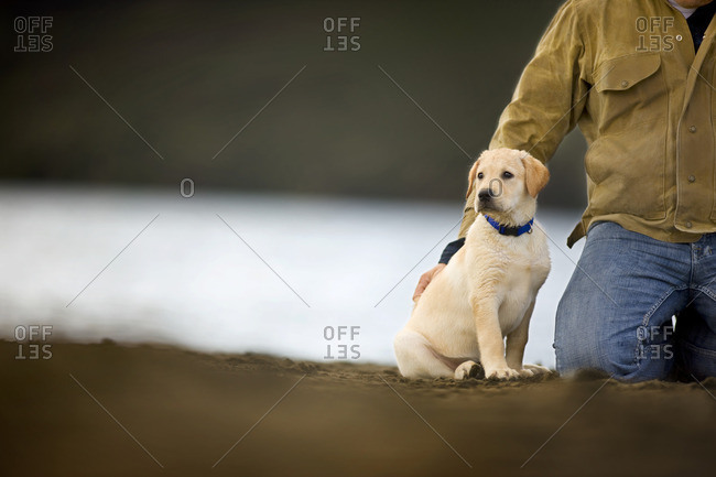 Puppy sitting by a lake with it's owner.