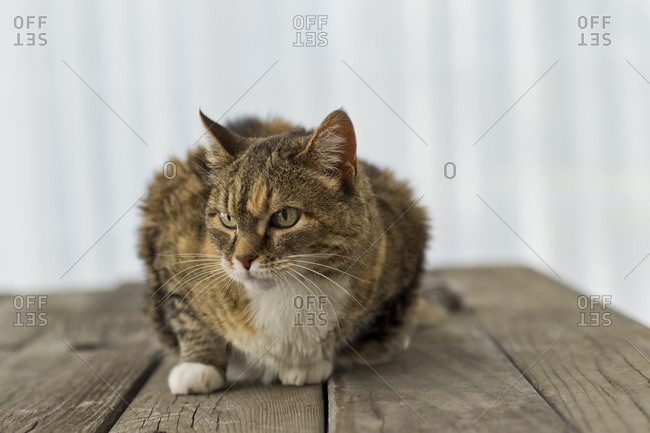 Cat on a wooden table.