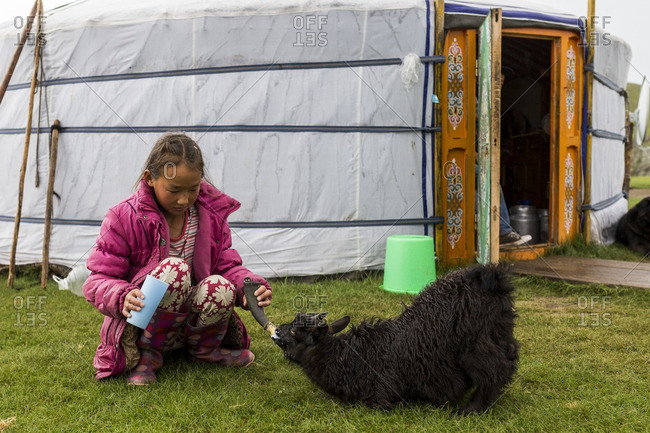 Tov, Mongolia - August 8, 2016: A young girl of a nomadic Mongolian family feeds a little goat Mongolia