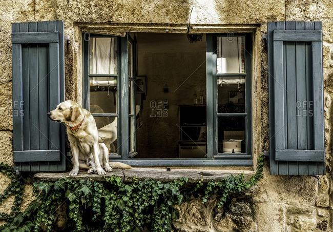 Dog sitting on window ledge in France