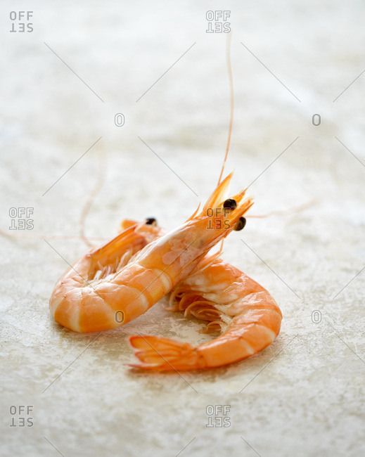 Close up of two whole prawns