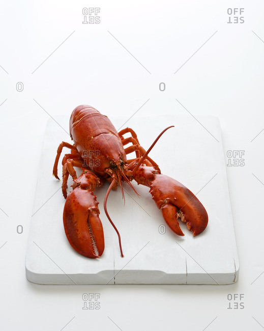 Cooked Canadian lobster on a white background