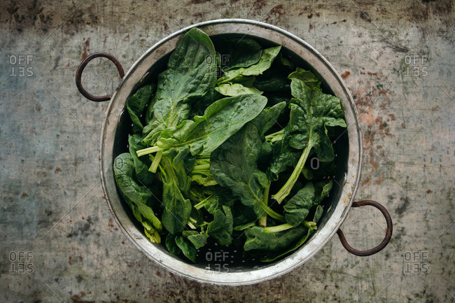 Spinach leaves in a metal colander
