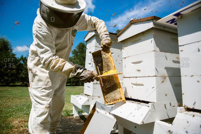 Beekeeper at beehive