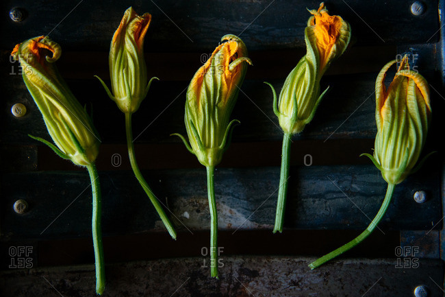 Squash blossoms on black metal