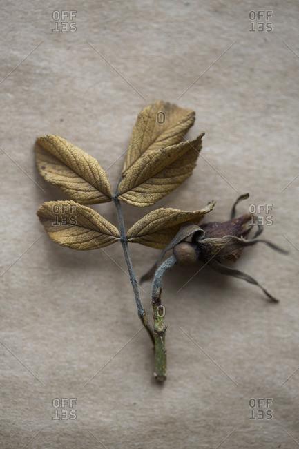 Dried leaf and flower