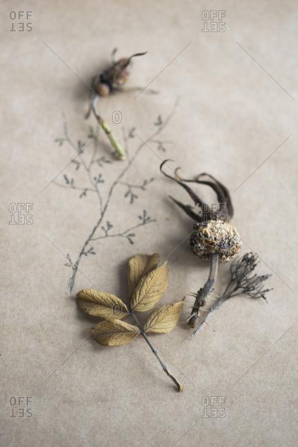 Dried plants in studio shot