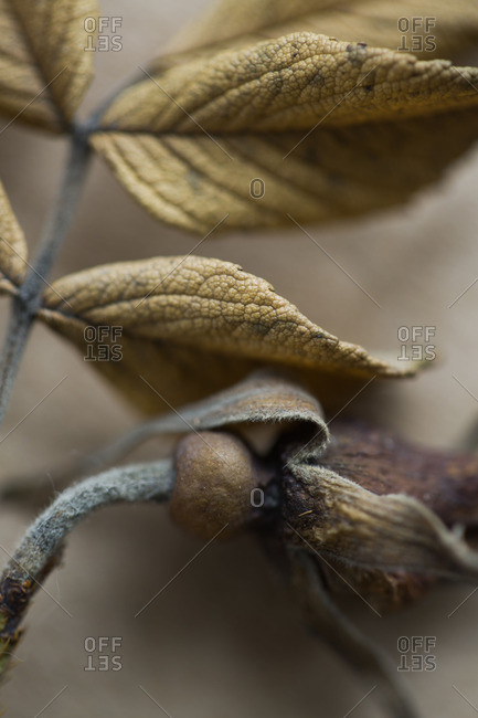 Close up on dried plants
