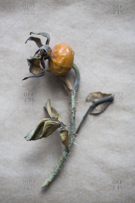 A picked briar plant