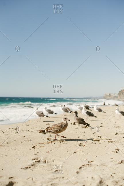 Seagulls on a beach on the coast of California