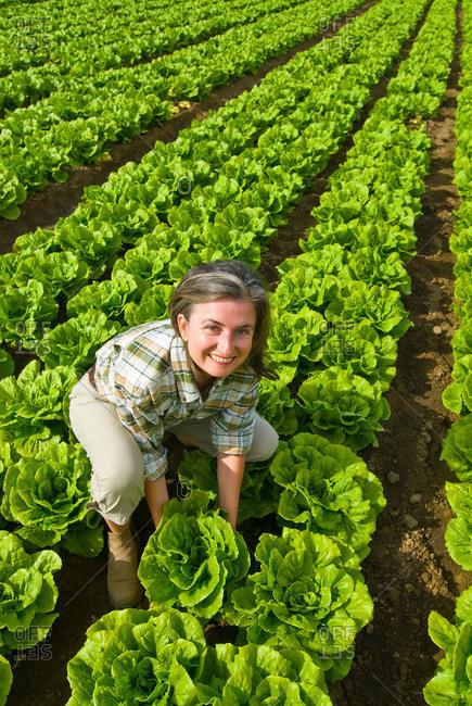 Woman in lettuce field