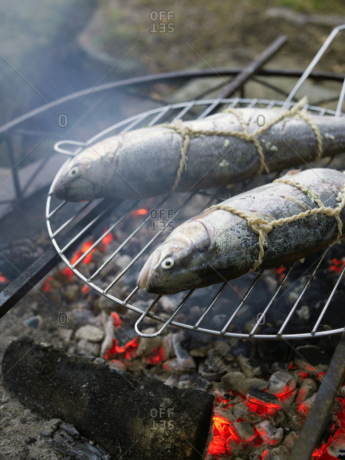 Two fish cooking on an outdoor fire