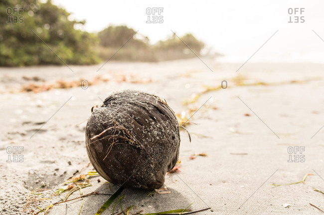 Coconut in the sand on a beach