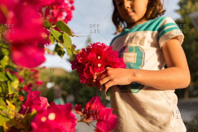 Little girl picking pink flowers from a bush