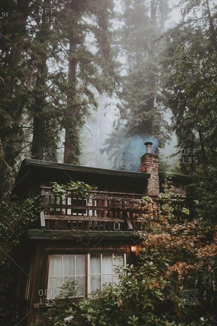 Cottage in foggy rainforest