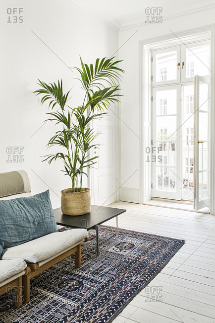Plant on a side table in a living room