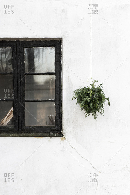 Exterior of a white house with a black window and green plant