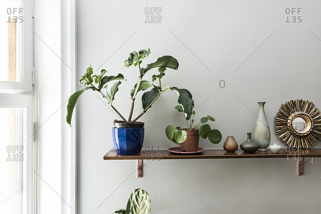 Shelf with plants, small jars and a mirror