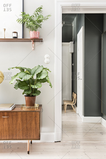 Plants on a shelf and cabinet in an apartment