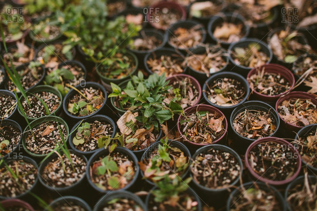 Potted plants outdoors in autumn