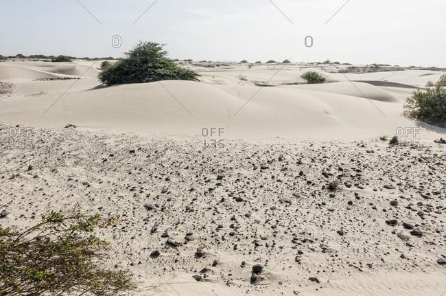 Dunes in the desert on the island of Boa Vista, Cape Verde