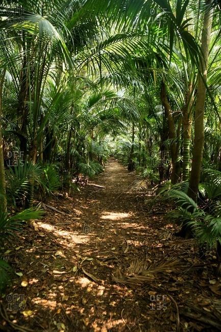 Path through tropical rainforest on Lord Howe Island, Australia
