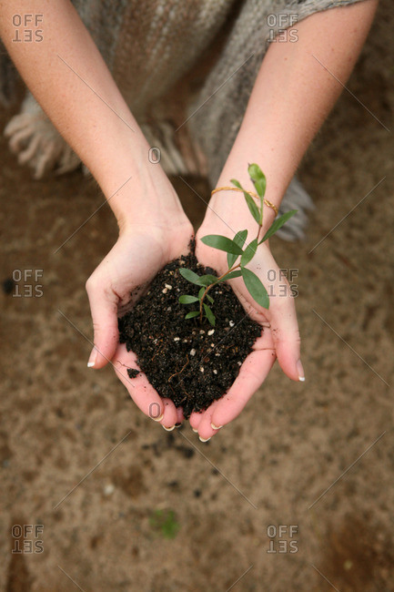 Close-up of plant seedling in dirt in woman's hands