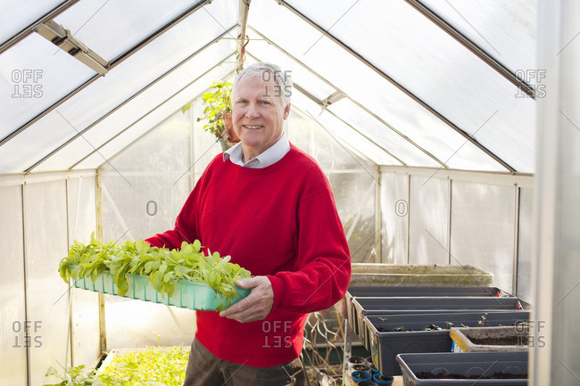 Senior man holding plants in greenhouse