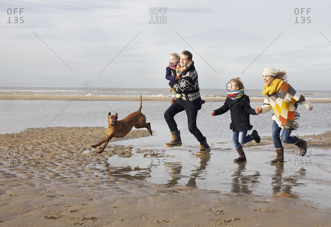 Mid adult parents with son, daughter and dog running on beach, Bloemendaal aan Zee, Netherlands