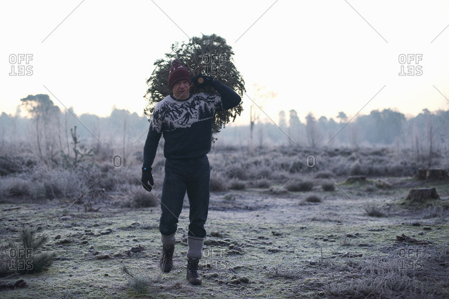 Woodsman with fir tree over his shoulder in forest clearing