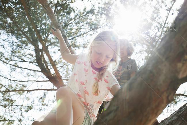 Boy and girl climbing tree